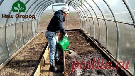 Спасительная обработка почвы в теплице от болезней | НАШ ОГОРОД | Яндекс Дзен