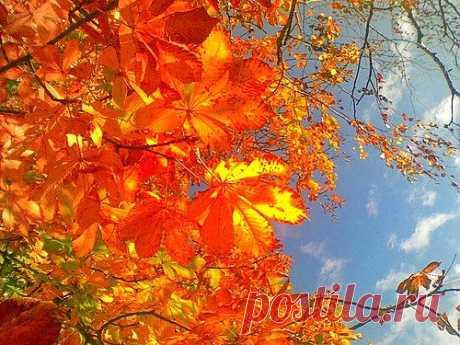 zateeva.mila — «ноябрь уж у двора» на Яндекс.Фотках