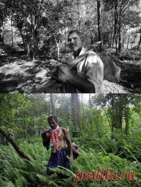 Индиец Джадав Пайенг в одиночку вырастил 550 гектаров взрослого леса. Интересно, что власти о существовании нового лесного массива не подозревали вплоть до 2008-го года…