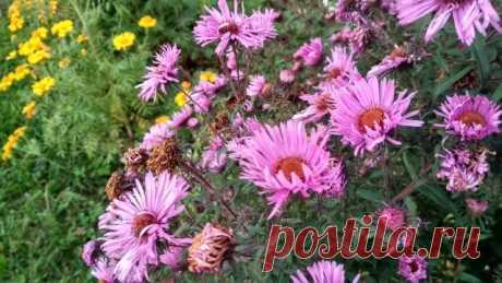 Какие цветы помогут не затухнуть вашим клумбам? | Дом с огородом в пригороде | Яндекс Дзен Осенние цветы способны не только снова «зажечь» клумбы, но и согреть своим видом.