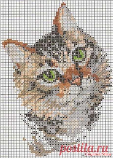 Кошки, котята, коты. Вышивка крестиком - Клуб рукоделия - Страна Мам