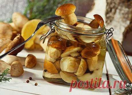Маринованные грибы. 5 лучших рецептов