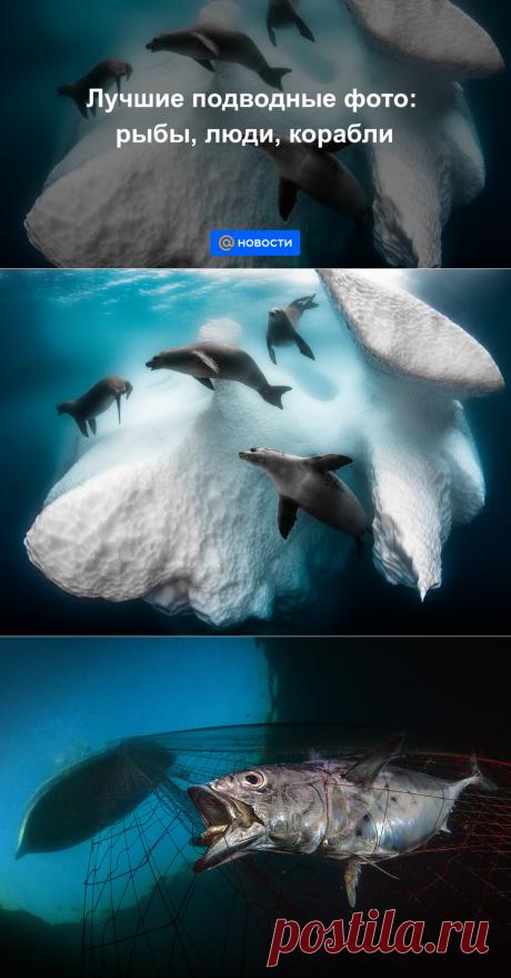 Лучшие подводные фото: рыбы, люди, корабли - Новости Mail.ru