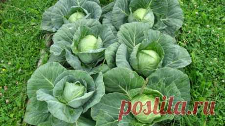 Удобрения и болезни растений — Дачные дела