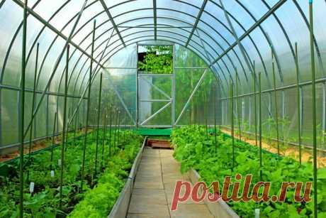 Уплотненные посадки в теплице: формируем удачное соседство овощей | О Фазенде. Загородная жизнь | Яндекс Дзен