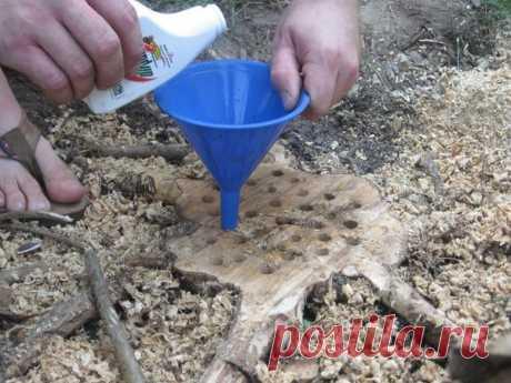 Как легко избавиться от старого пня с помощью удобрения не нанеся вред земле!? | Любимая Дача | Яндекс Дзен