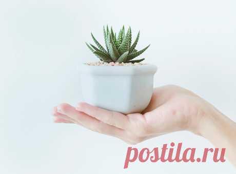Поселите в спальне хотя бы одно растение.
