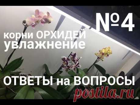 ОРХИДЕЯ в ДОМАШНИХ УСЛОВИЯХ корни орхидеи, увлажнение орхидеи