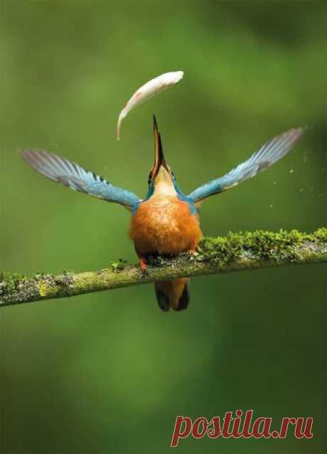 18 восхитительных снимков с конкурса лучших фотографий птиц