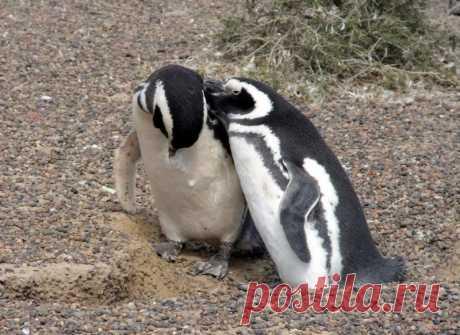 Пунта Томбо - место обитания магеллановых пингвинов