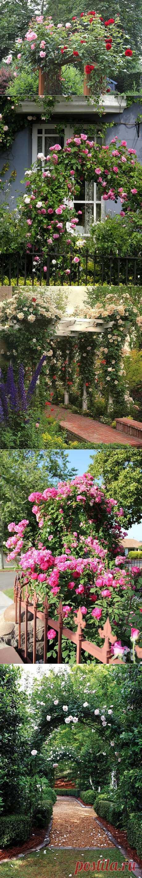 Садовые арки из роз. / LiveInternet