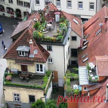 Маленький оазис на крыше