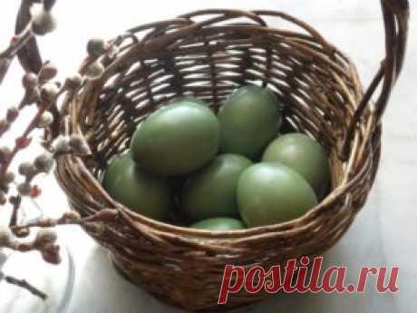 Como pintar los huevos en el color verde por los colorantes naturales   las Recetas de la foto