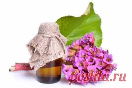 Бадан: эффектные соцветия, целебные корневища  Бадан – растение-универсал: обладая широким спектром лекарственных свойств, он великолепно смотрится на клумбе. Пик его декоративности приходится на конец весны. Летом привлекательны кожистые блестящ…