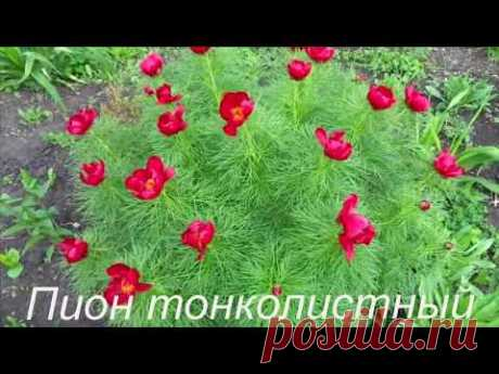 Самые-самые красивые многолетние цветы! Посадите их обязательно!!!