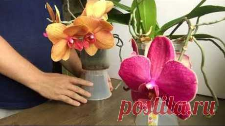 как ОРХИДЕИ НЕ ПЕРЕСАЖИВАТЬ после покупки в магазине, ЧТОБЫ орхидея ЦВЕЛА БОЛЬШЕ ГОДА