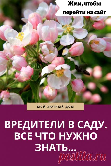 все что стоит знать о вредителях в саду