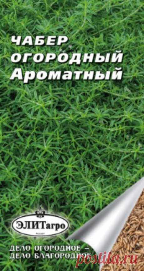 """Семена. Чабер огородный """"Ароматный"""" (вес: 0,2 г) Всхожесть: 89%. Рекомендуется для использования в домашней кулинарии (салатах, супах, мясных, овощных блюдах), для ароматизации уксусов и маринадов, при консервировании огурцов. Среднеспелый. Период от полных всходов до цветения 45-48 дней. Растение высотой до 50 см, с хорошо развитым..."""