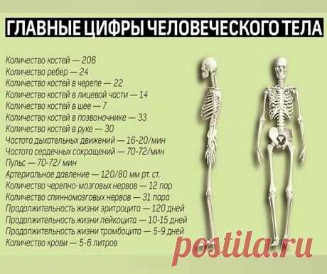Цифры нашего организма