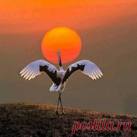 Дитя заката ...Волшебно! ... Балет на закате дня...Супер кадр Настолько красиво, что нельзя оторвать взгляд от этого пейзажа!