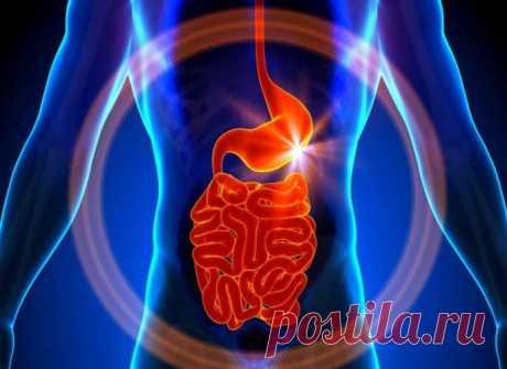 La Depuración antiparasitaria – la Experiencia Personal