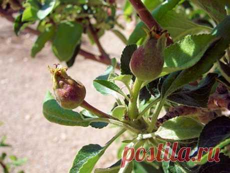 Как ухаживать за садом в июне – полезные советы от агронома   Уход за садом (Огород.ru)