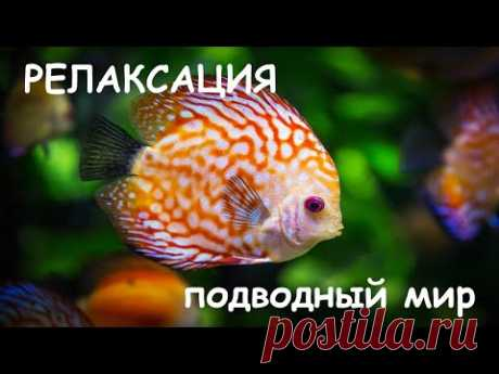 Релаксация. Подводный мир. Нежная музыка и фантастическое видео успокаивают нервную систему. - YouTube