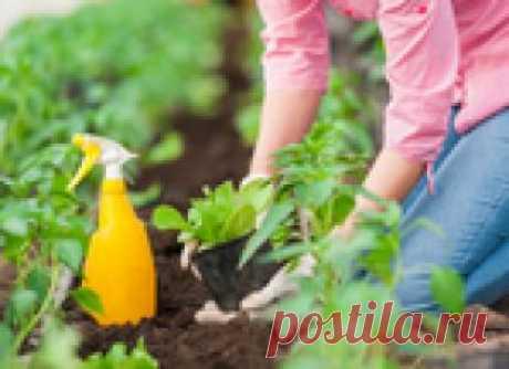 Адская смесь для всех культур 2 в 1: защита от вредителей + подкормка и стимулятор роста