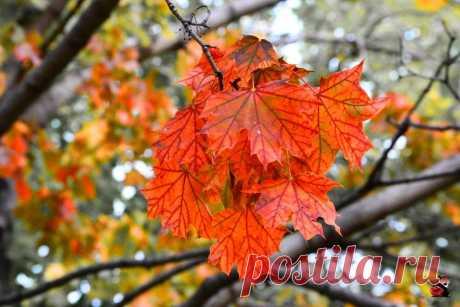 Осенний дух