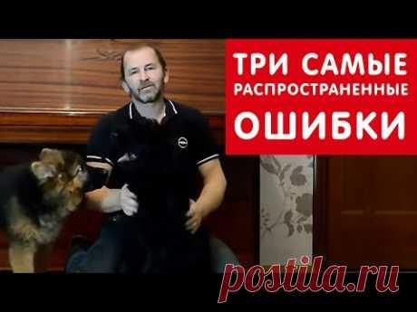 Три распространенные ошибки при воспитании щенка | Урок 3 видеокурса «Растем вместе»