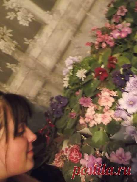 Фиалки 2013   После рождения ребенка, у меня было жуткое желание, чем нибудь заняться, и на ум мне пришли растения, хотя до беременности, считала, что цветами только в пожилом возрасте буду заниматься  . Вообщем, меня так восхищали разные цветы, набрала кучу листочков, пасынков, очень долго ждала, помню фиалки у меня болели долго. Я их купаю, чищу.. да, фиалки я мою)) только если мыть, то нужно чтобы не было не малейшего ветерка ну и т.д. как нибудь напишу об этом!