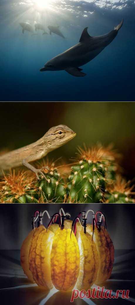 (+1) тема - Лучшие фотографии National Geographic за сентябрь 2013 | САМЫЙ СОК!