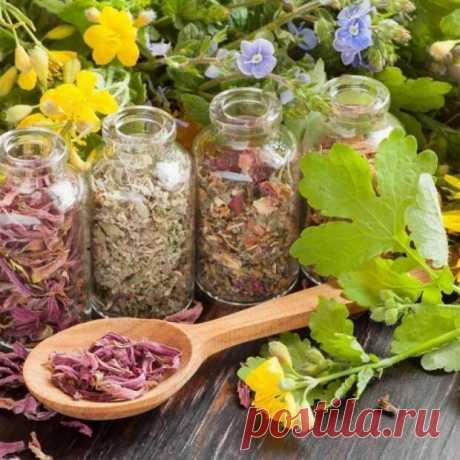 ¡Las mejores plantas antiparasitarias es es necesario saber!