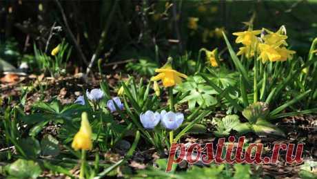 Какие лечебные травы собирать весной, как применять по медицинским показаниям