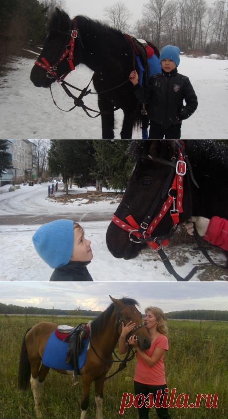 Сколько стоит погладить лошадку | Интересно о лошадях | Яндекс Дзен