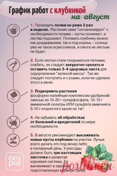 Список работ с клубникой на август - Огород.ru