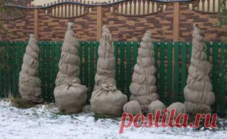 Укрываем растения с умом: основные ошибки садоводов при подготовке сада к зиме   Наша Дача   Яндекс Дзен