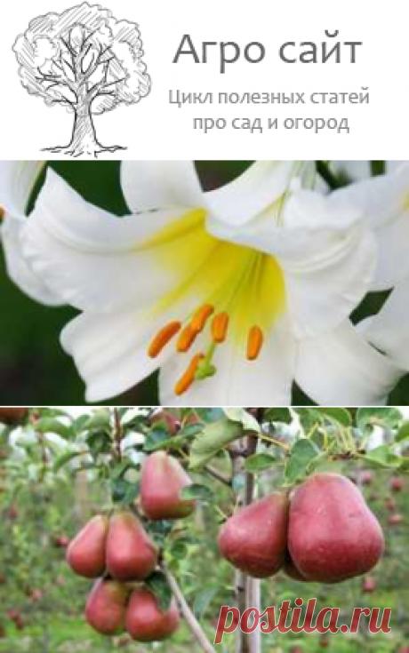 Плодовые культурные растения примеры и названия