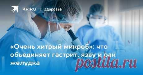 «Очень хитрый микроб»: что объединяет гастрит, язву и рак желудка Профессор Сеченовского университета рассказал, почему Helicobacter Pylori нужно найти и уничтожить