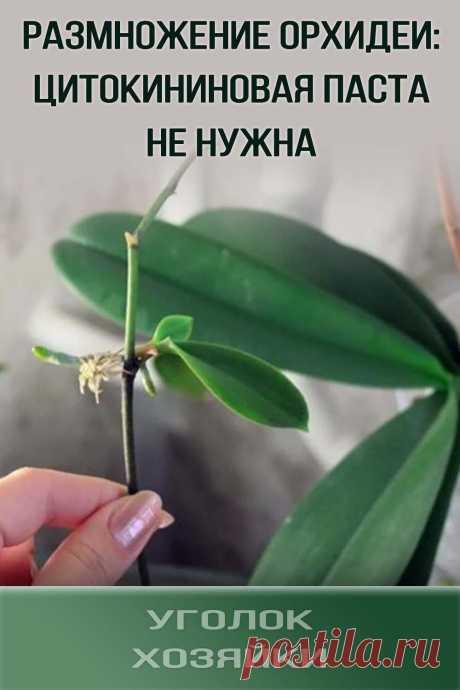 Чтобы развести орхидею в домашних условиях гарантированно и без применения цитокининовой пасты, стоит воспользоваться простым способом. Для этого необходимо всего лишь найти пустую пластиковую бутылку, собрать мох и выполнить несколько несложных шагов.