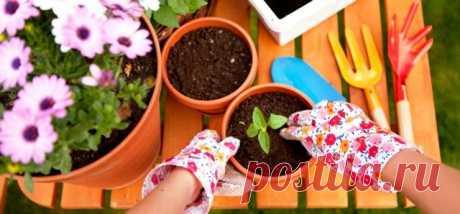 Лунный календарь для комнатных растений на март 2020 года