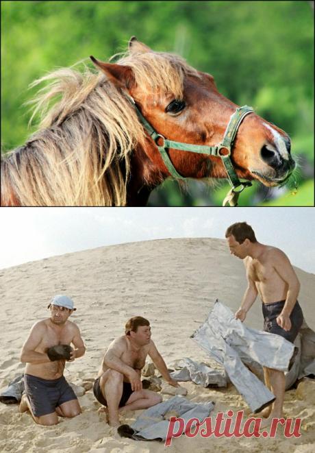 Конь с огнетушителем. В какие игрушки играют лошади | Своих не едим. | Яндекс Дзен