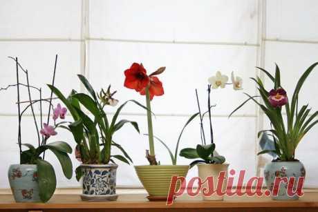 (+1) тема - Свежие ноты в вашем интерьере: размещаем комнатные цветы | Интерьер и Дизайн