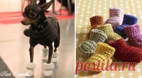 Вяжем для собак маленьких пород со схемами: инструкции с описанием