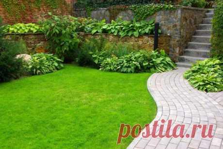 Растим газон на газетах: метод английских садоводов | 6 соток