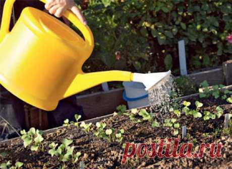 Садово-огородная магия: заговоры и советы для вашего урожая (чсть 2) - Праздничный мир