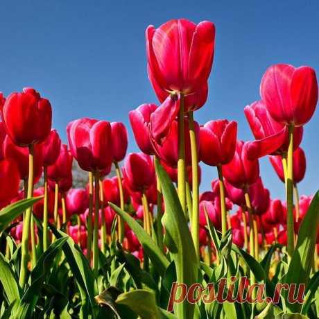 Приглашаем посетить яркое весеннее событие - парад тюльпанов 2019 в Никитском ботаническом саду! Парад тюльпанов – традиционная ежегодная выставка в Никитском ботаническом саду. С каждым годом количество представленных посетителям цветов заметно возрастает, а в этом сезоне в НБС высадили уже около ста тысяч цветов. Парад тюльпанов 2019 года обещает быть особенно прекрасным! Он стартует в конце марта и будет продолжаться до конца апреля. У вас есть возможность посетить пара...
