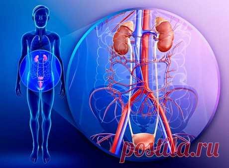 Основные признаки урологических заболеваний...