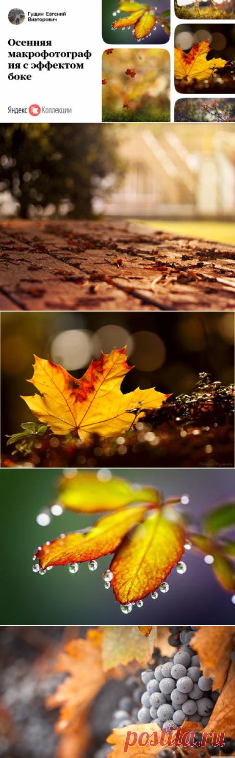 38 карточек в коллекции «Осенняя макрофотография с эффектом боке» пользователя Гущин Евгений Виаторович в Яндекс.Коллекциях