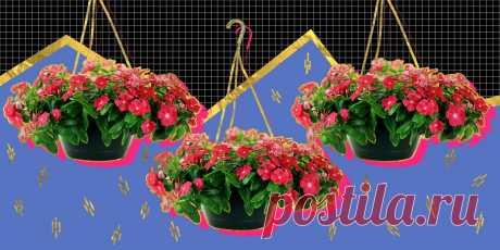 10 цветов, которые стоит посадить на балконе. Бегония, петуния, ипомея, душистый горошек и другие яркие растения, которыми можно любоваться до осенних заморозков.